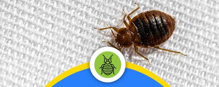 Bed Bug Control Dickson