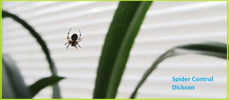 Spider Control Dickson, ACT