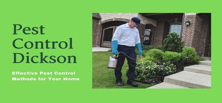 Effective Pest Control Treatment Dickson