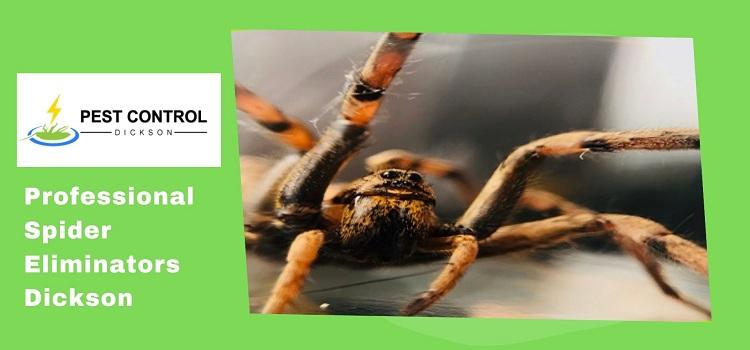 Professional Spider Eliminators Dickson